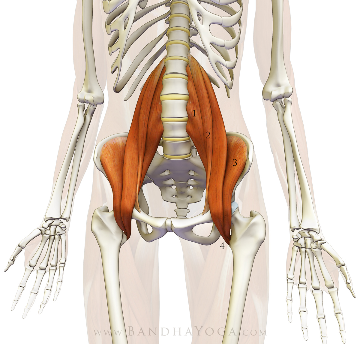 The sacroiliac joint, sciatica, and unexplained lower back pain ...